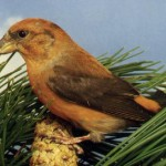 Нож Byrd BY07P Crossbill